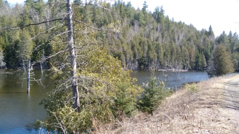Buckleberry trail, water and trees